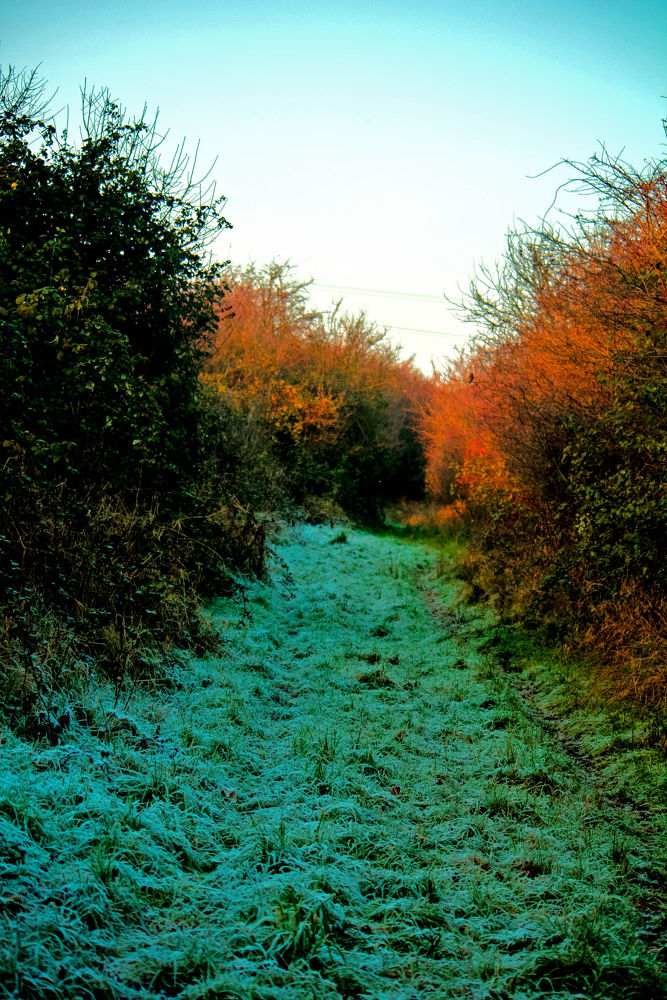 frosty path by jeff