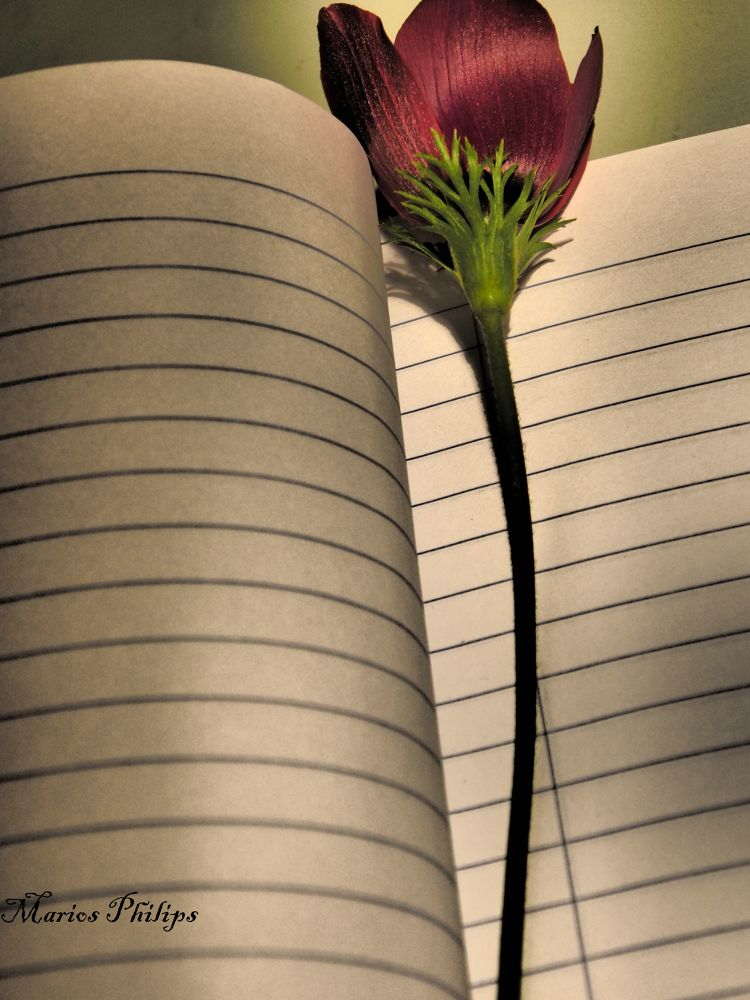 My notebook 2 by mariosphilips