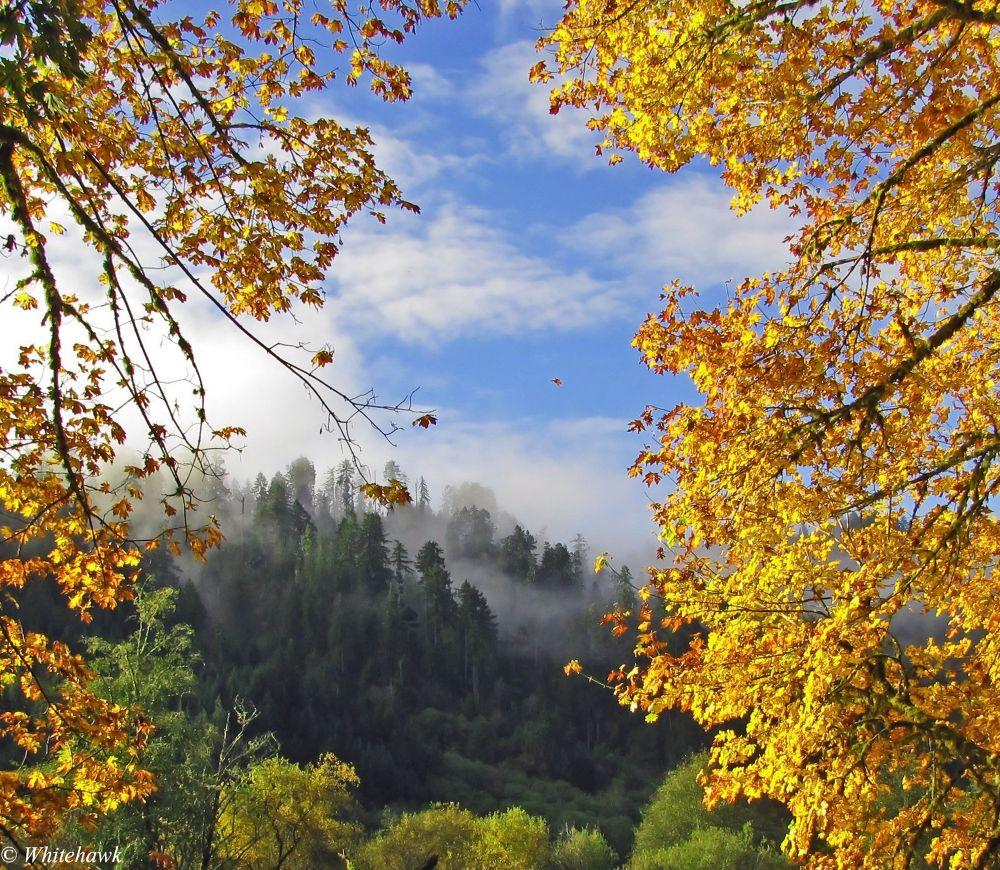 Autumn leaves by whitehawk