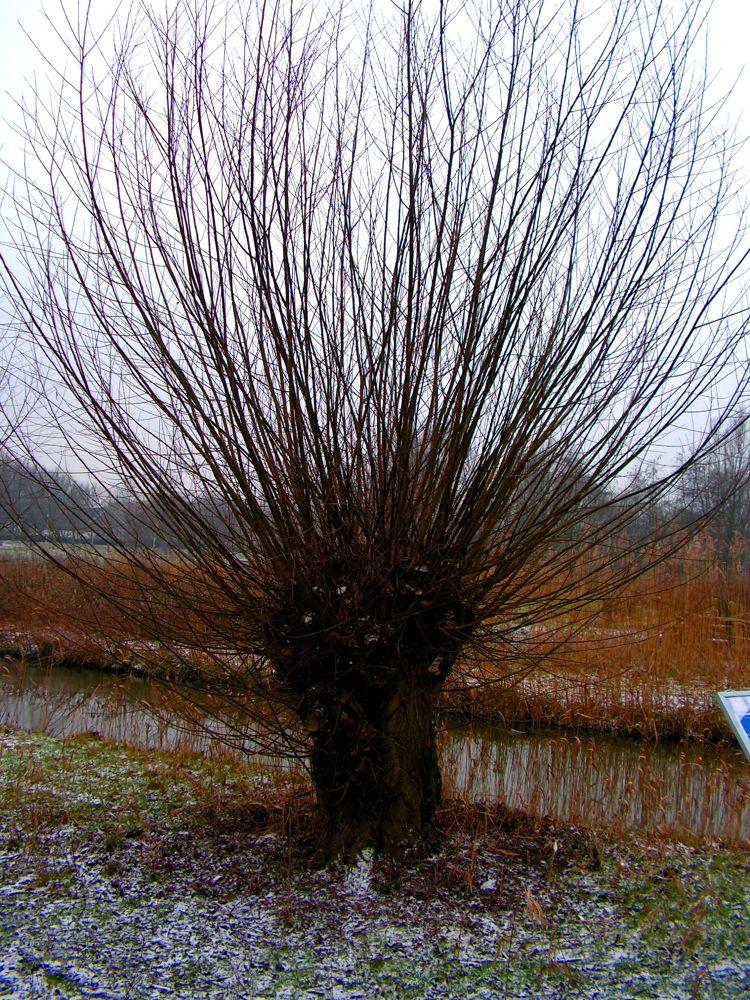 2012-jan-westerpark (3) by thenn