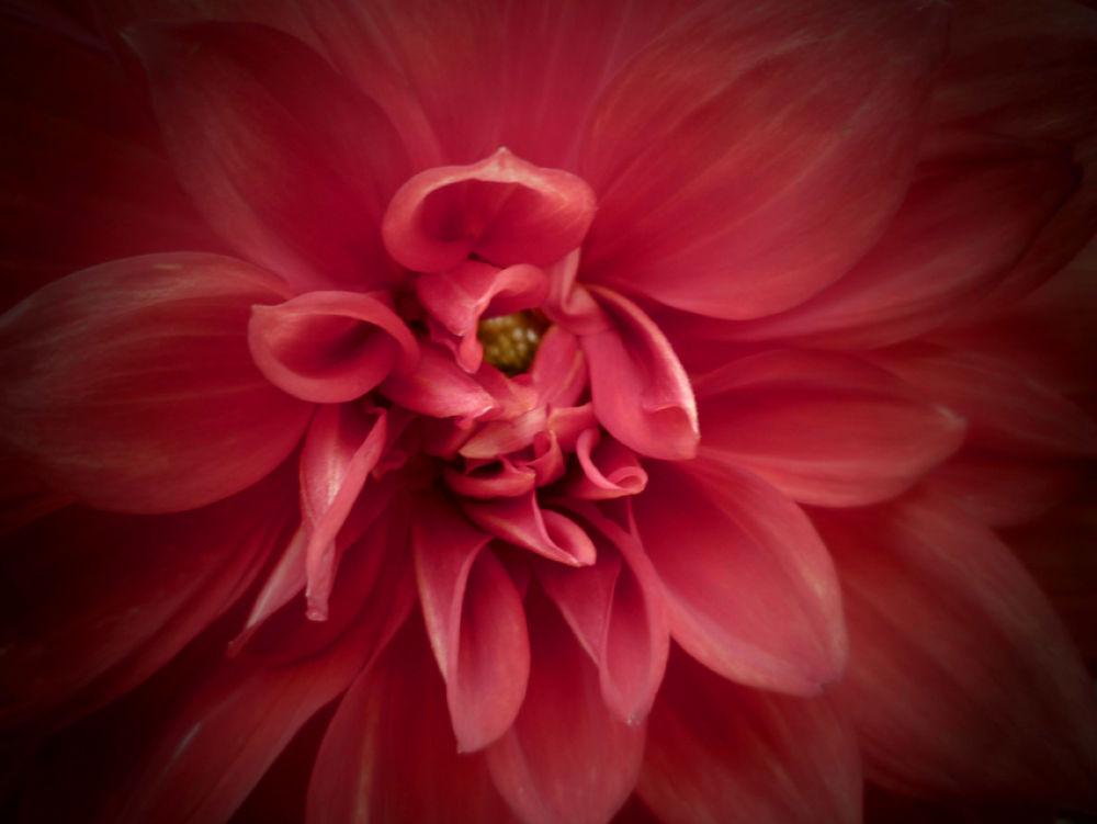 Flower Study, Botanical Gardens. Madrid, Spain by amyCorder