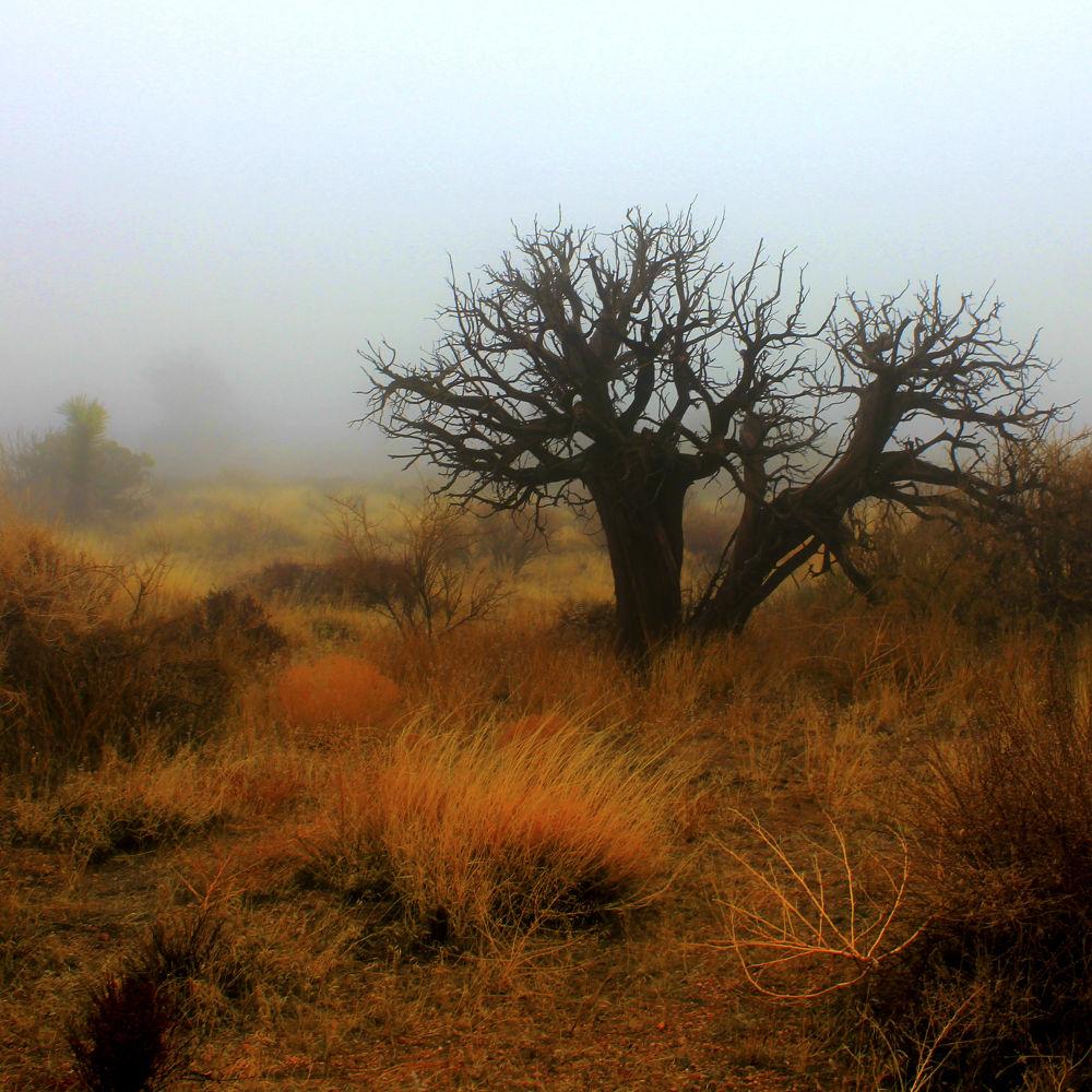 winter in the desert by kabirghafari9