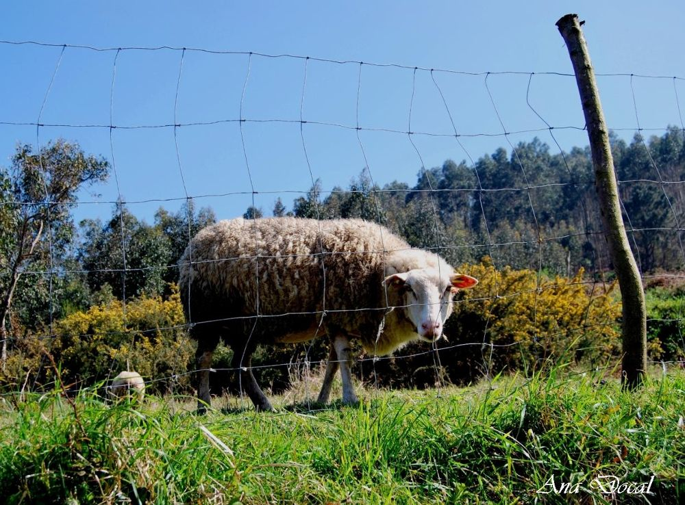 I´m looking you... by Ana Docal