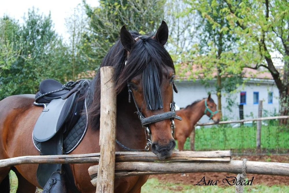"""""""San Marcos"""" Horse Feast  (Galicia) by Ana Docal"""