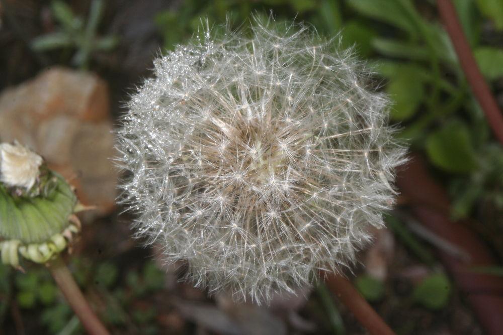 flower by hspublicidade