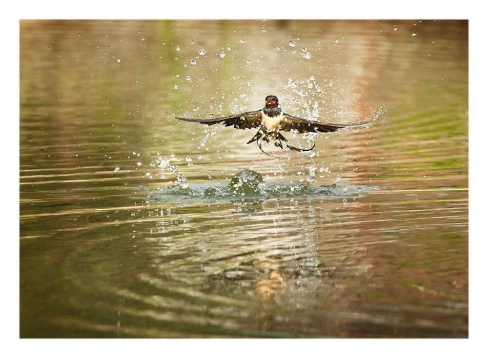 Swallow wellness by dantedarker