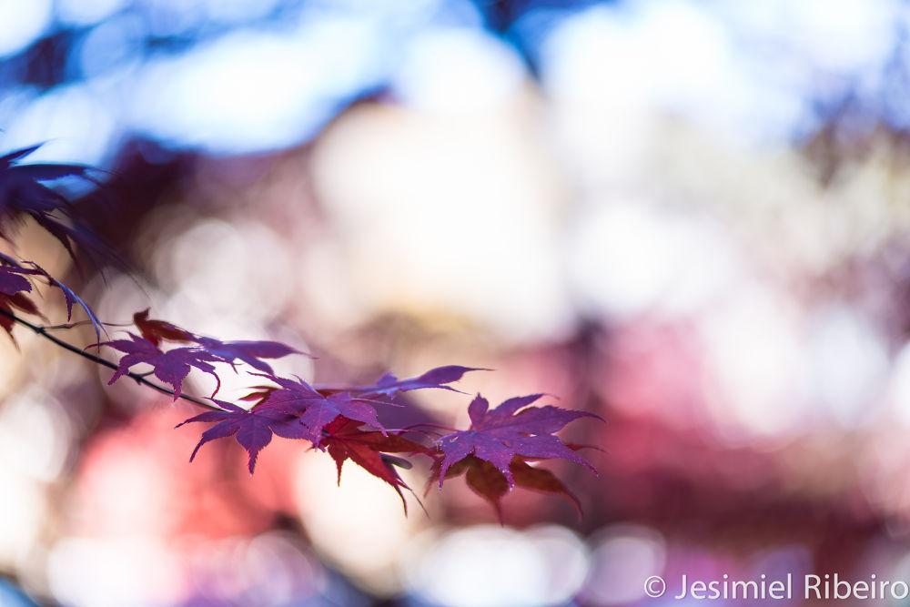 Bokeh - autumn - 2013 - Japan by JesimielRibeiro