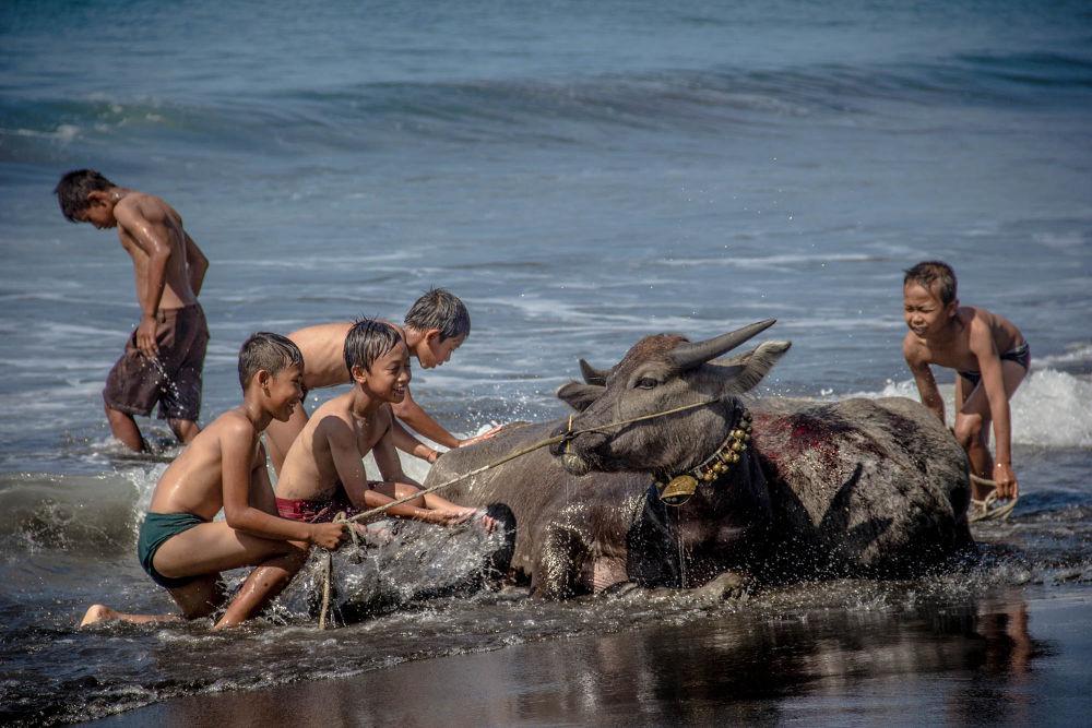 :::  Bali Boys  Giving water buffalo a Bath ::: by Dean Bali Photography