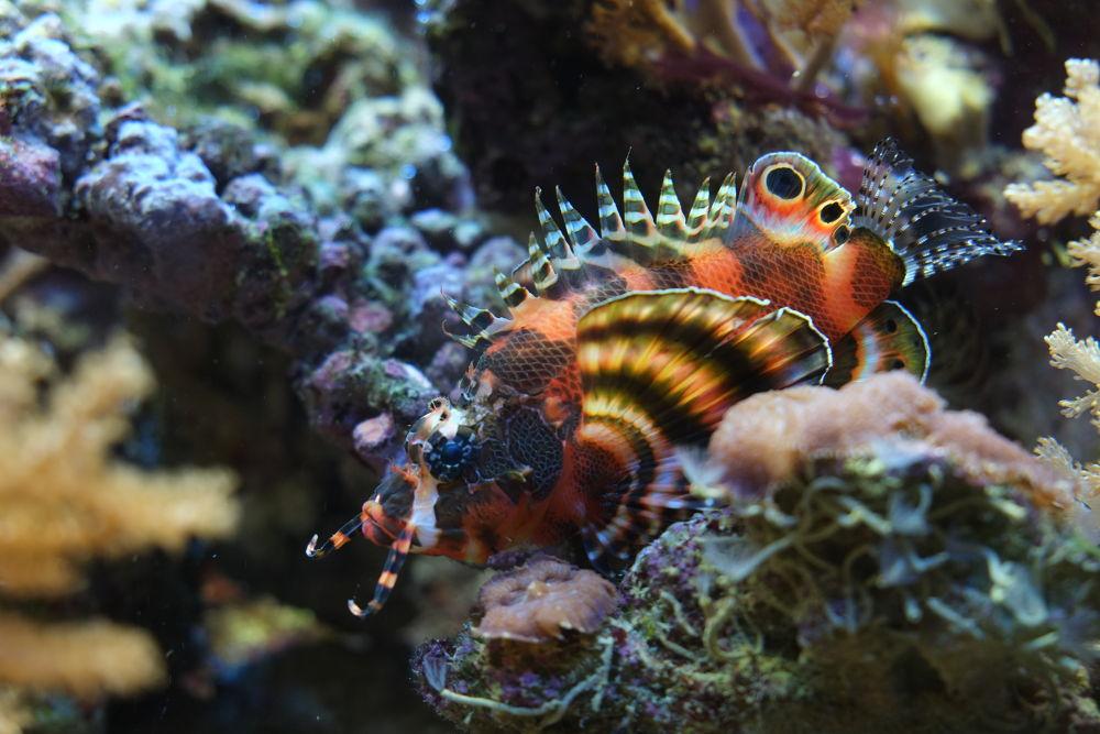 Fish by CColon