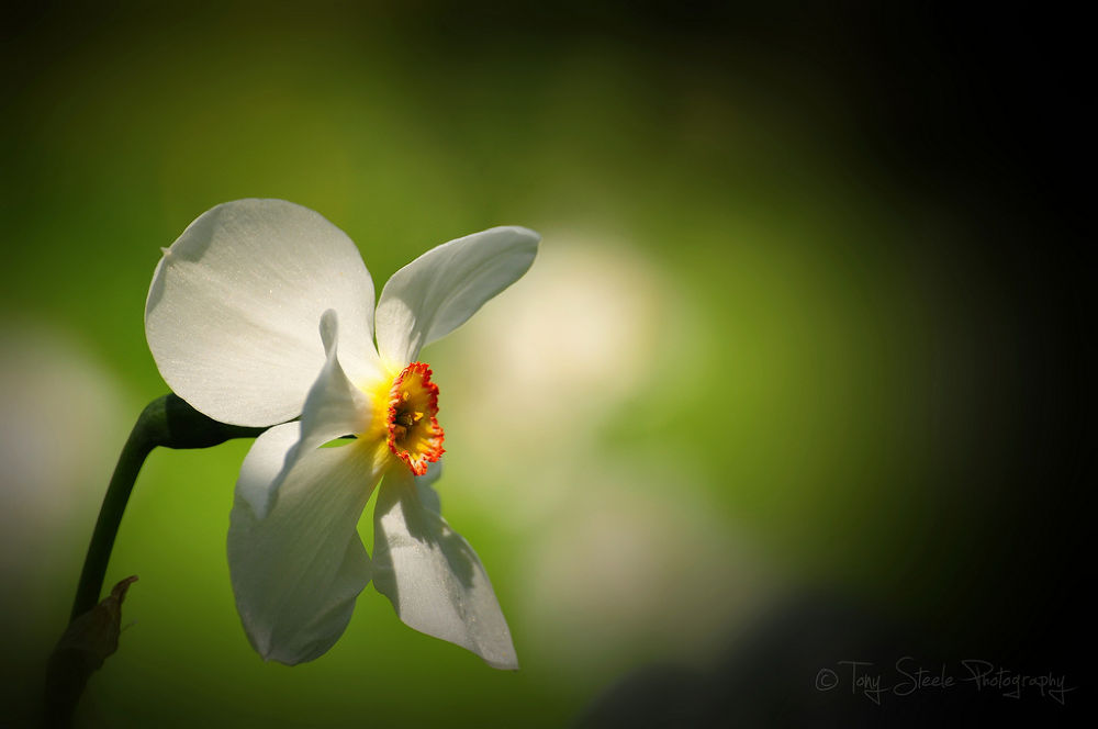 Photo in Nature #daffodil #spring