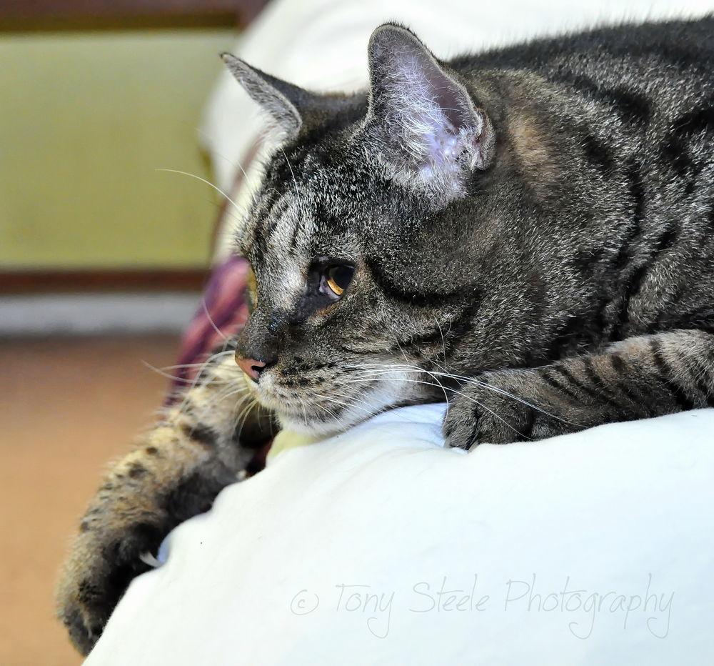 My Cat Eric by Tony Steele