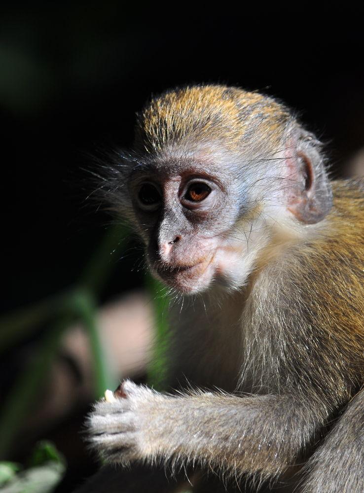 Monkey by Tony Steele