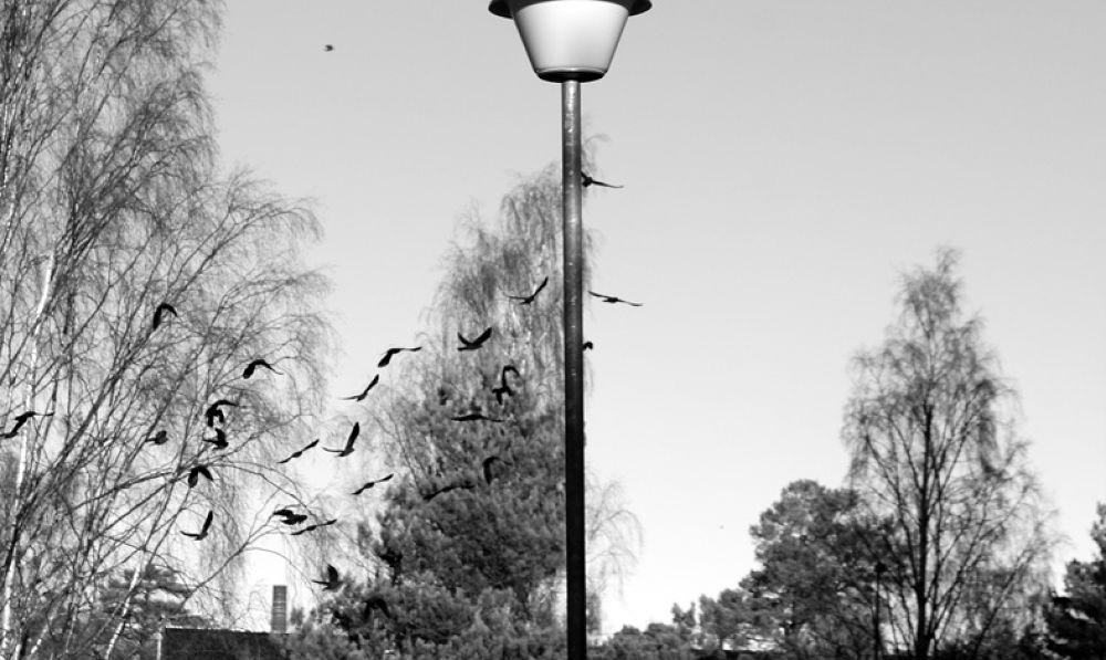 fly by tari palmroth