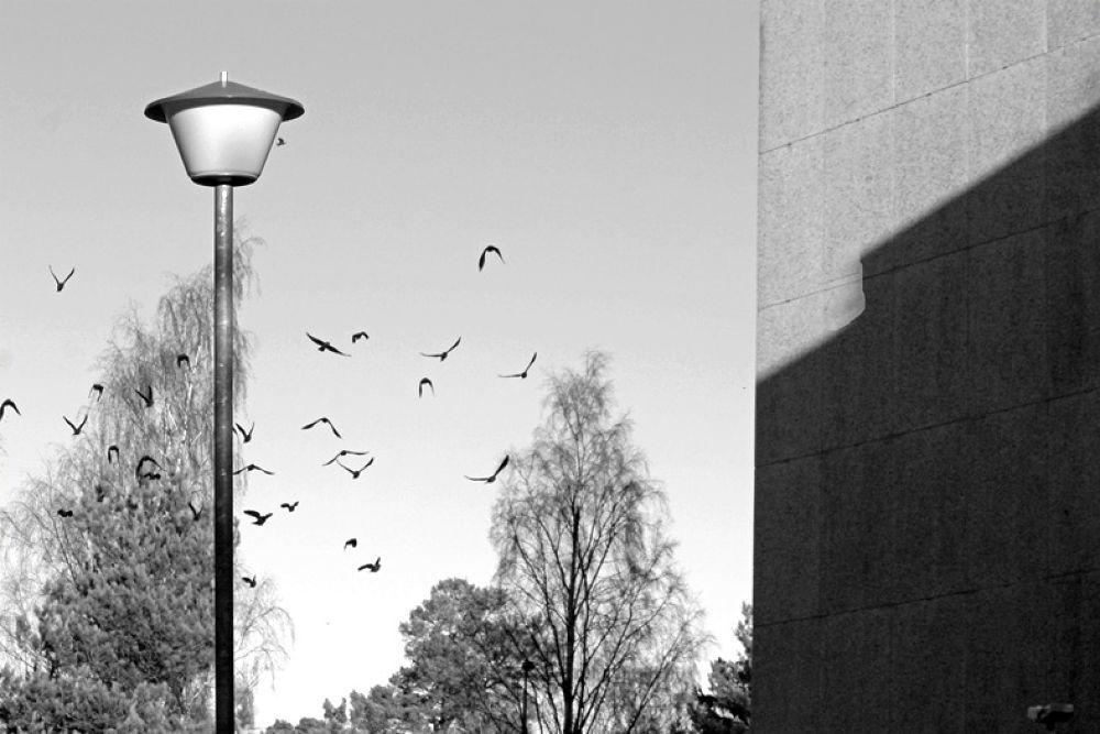 flyfly by tari palmroth