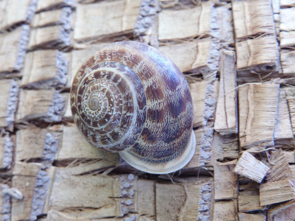 Photo in Animal #snail #nature #landscapes #animal
