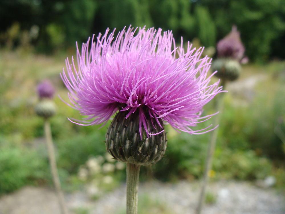 Purple Macro Flower by Sven Herkenrath