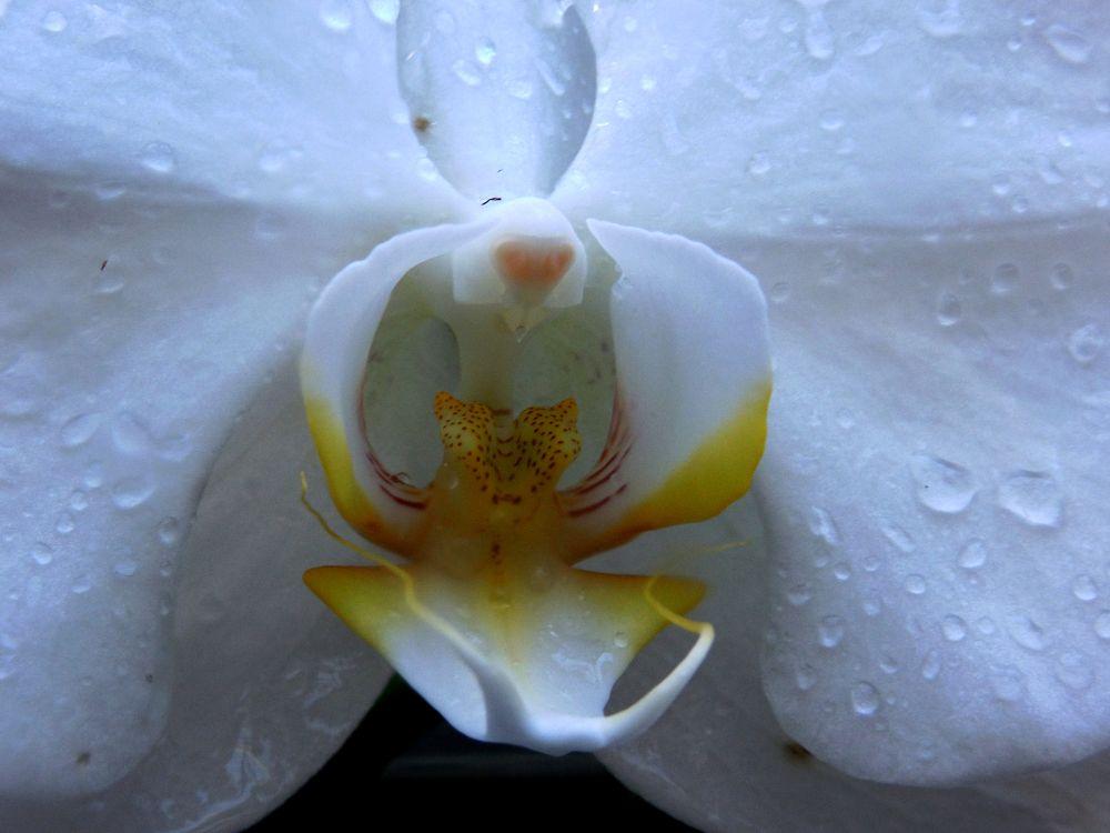Orchid Flower by Sven Herkenrath