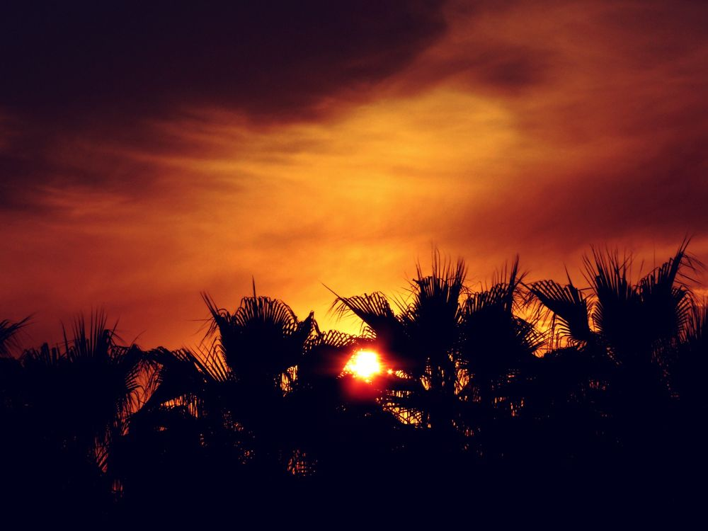Sunset with Palms by Sven Herkenrath