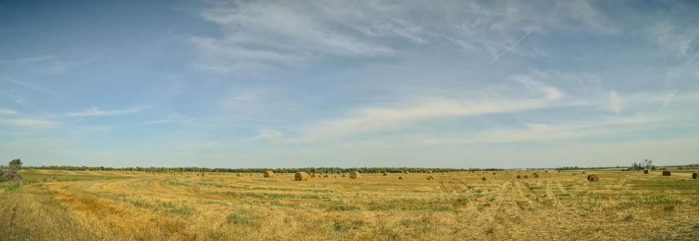 Prairie, Dawgs by Michael Sinclaire