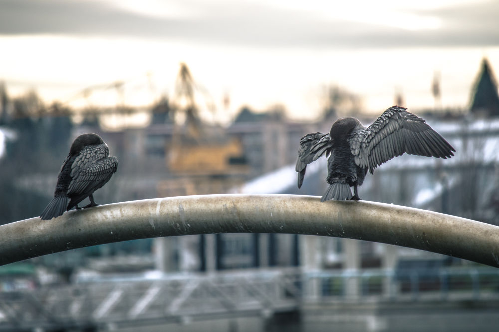 Birds of a Feather by Michael Sinclaire