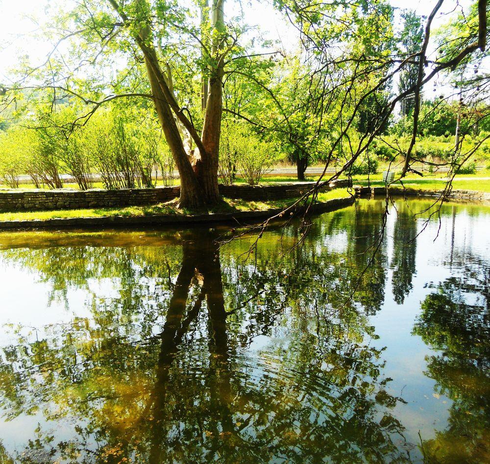 REFLECTION 2 by SLADJANA VASIC