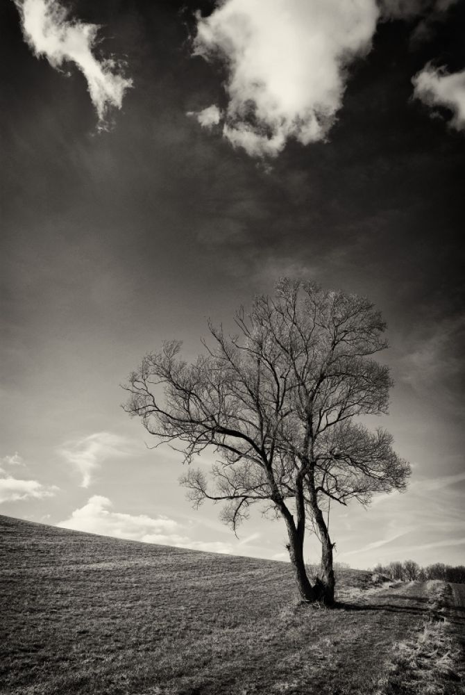 Photo in Random #nature #natur #tree #bw #sw #black and white #life #fine art #minimal #clouds
