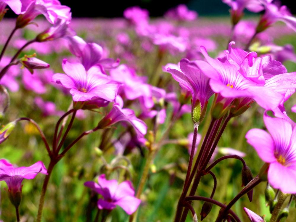 solo flores..... by marisabelcaferri