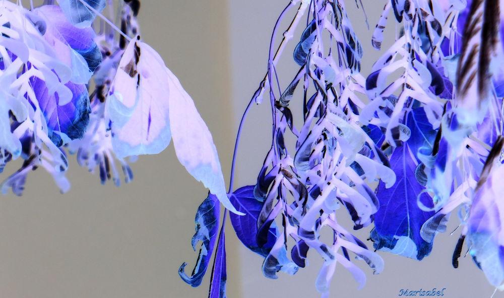 Otoño en blue. by marisabelcaferri