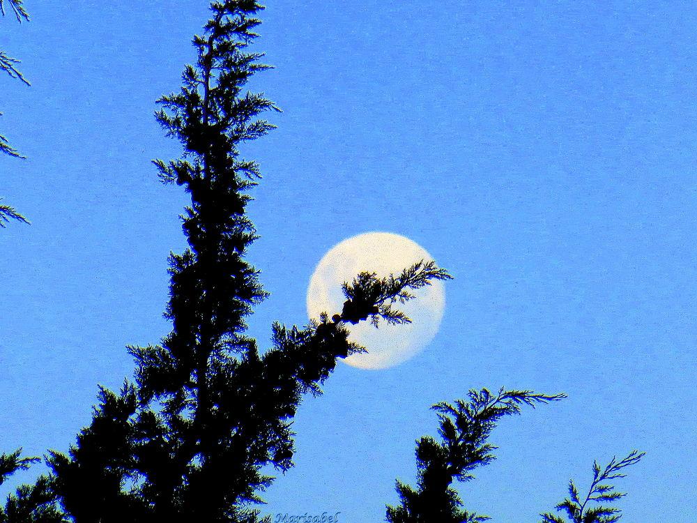 Luna al atardecer..... by marisabelcaferri