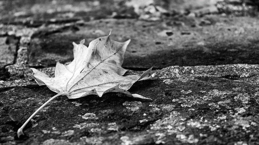 Leaf by Franziska Nierath