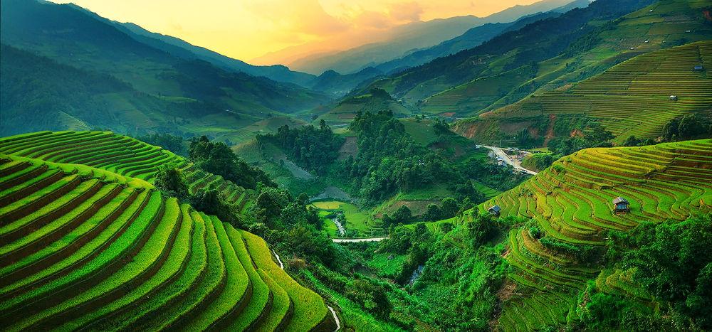 Photo in Landscape #rice terraced #yellow field #green field #vietnam #mu cang chai #rice #paddy field