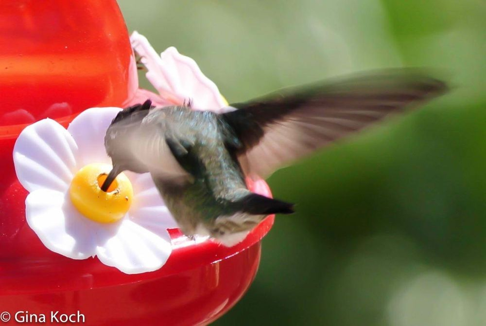 Hummer by Gina Graves