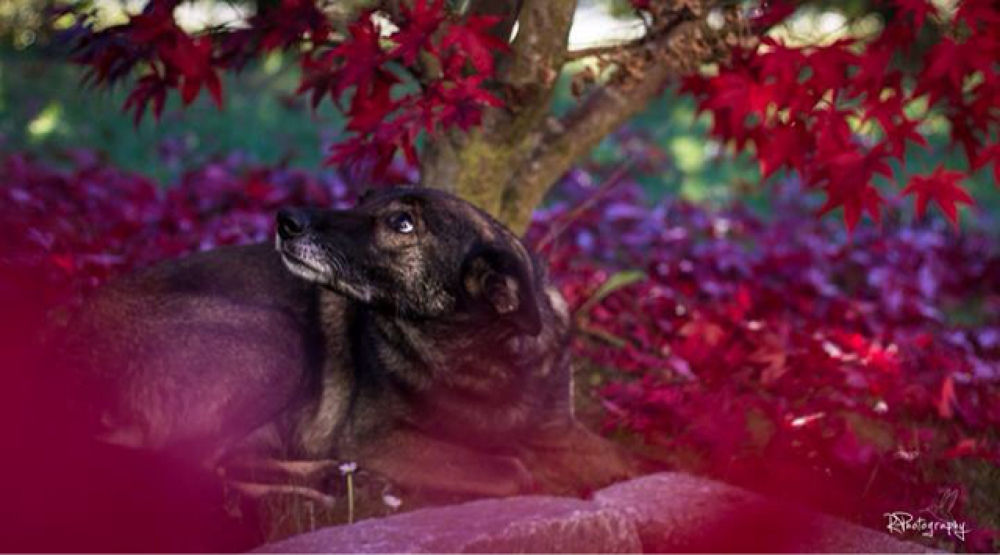 dog in autumn by RPhotography.Ruth