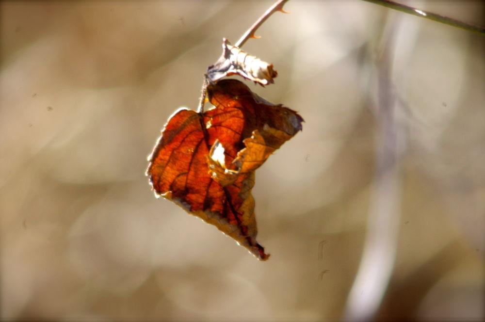 Autumnleaf by annemariealard