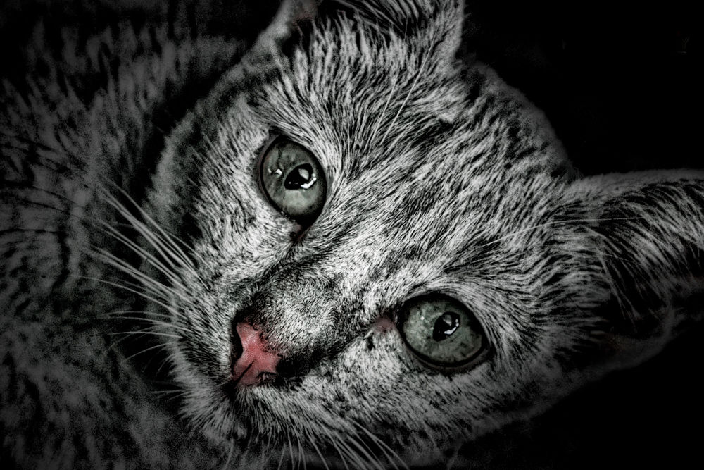 CAT by ismuzath