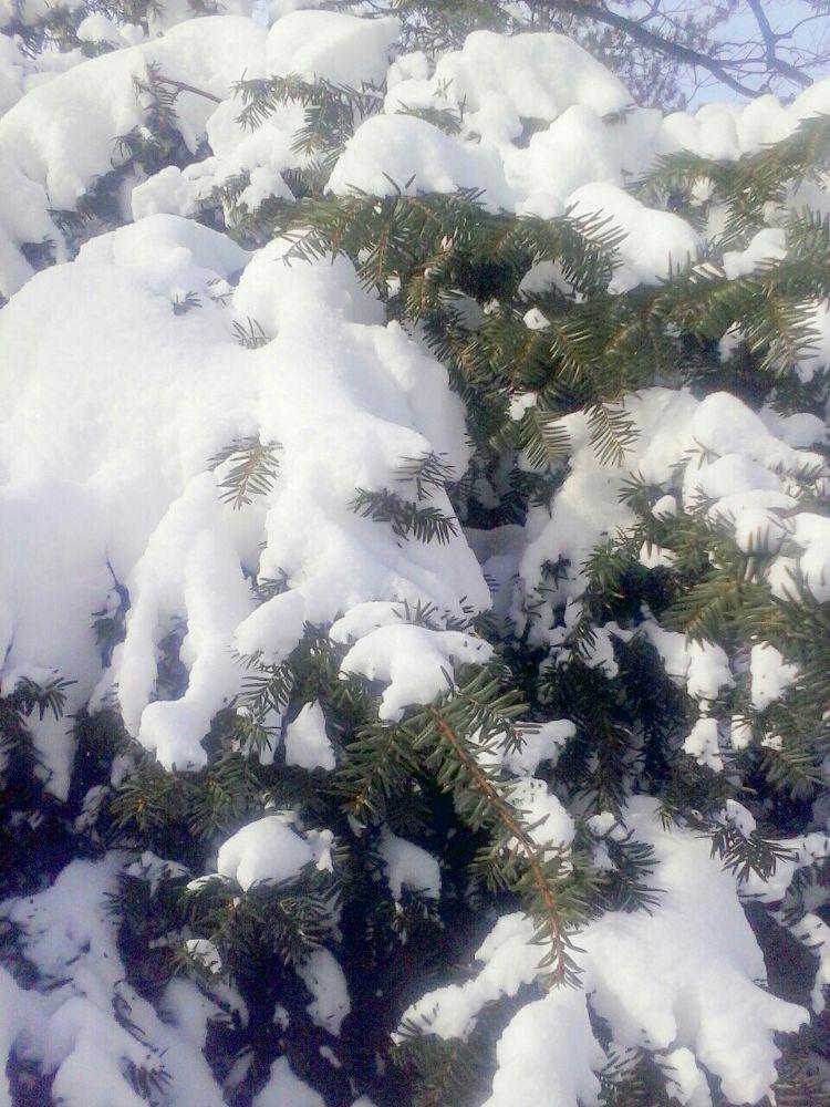 New Year Snow by DarlingBella