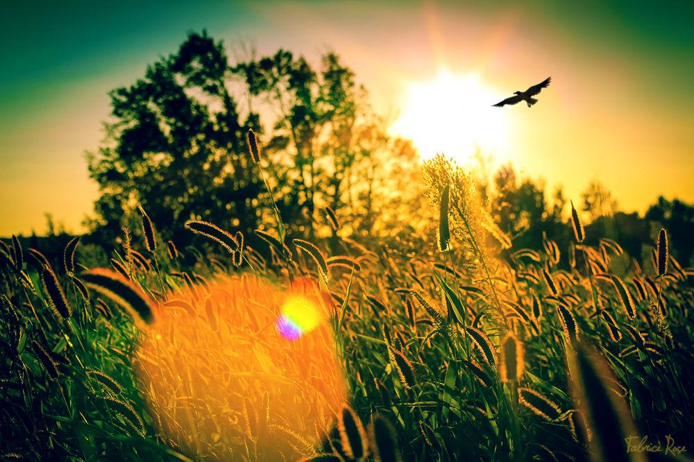 Sunshine by FabriceRose