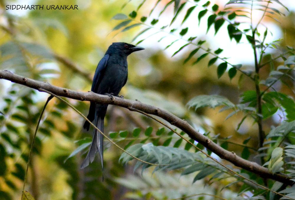 bird by Siddharth Urankar