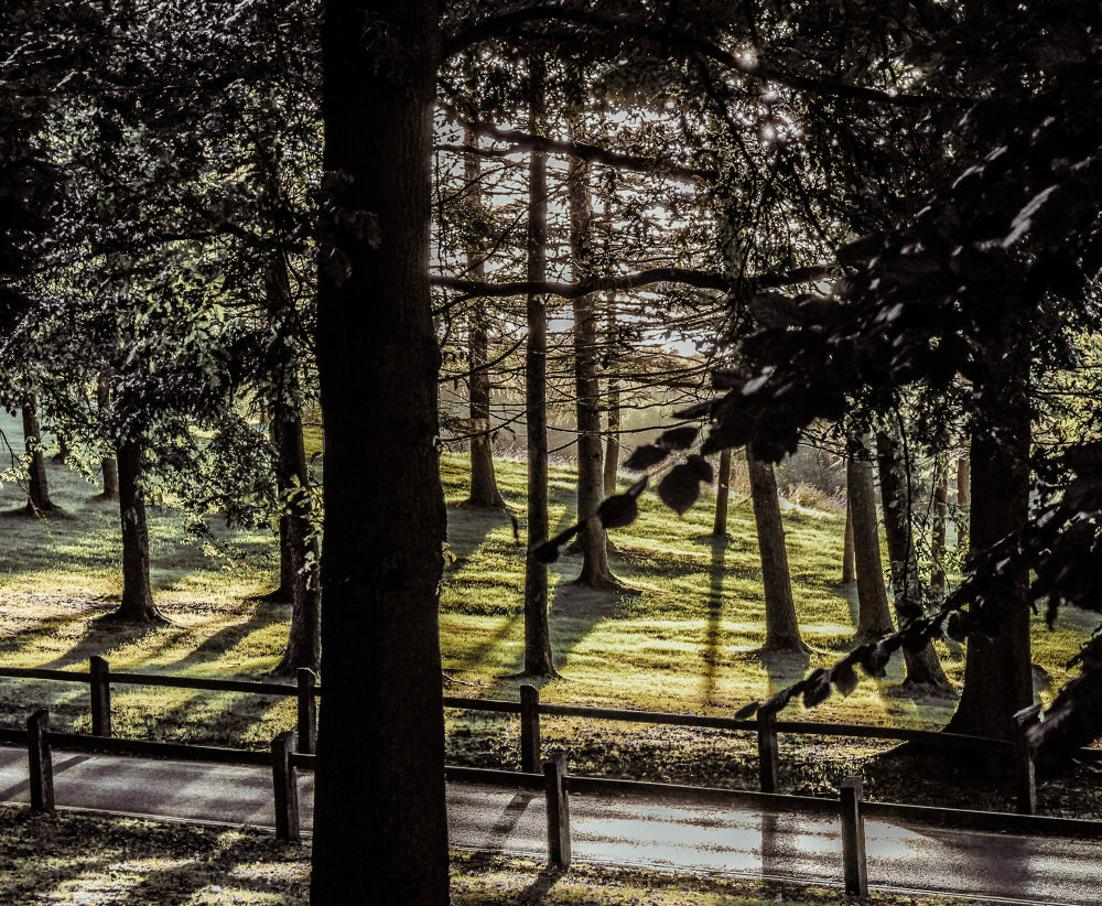 joging park by IS3ivan