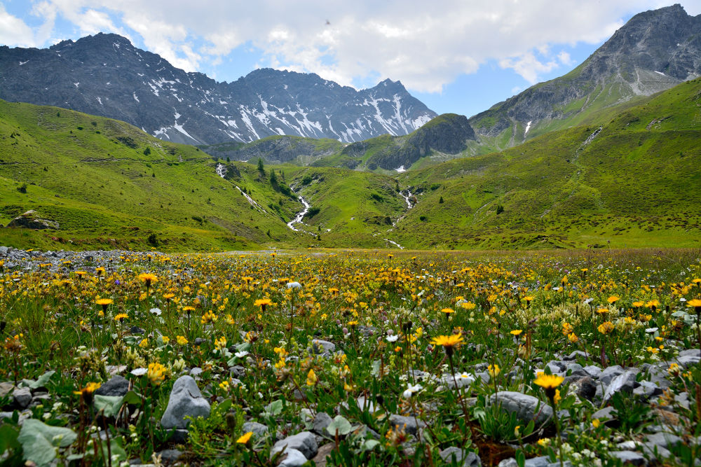 Alpine by Men