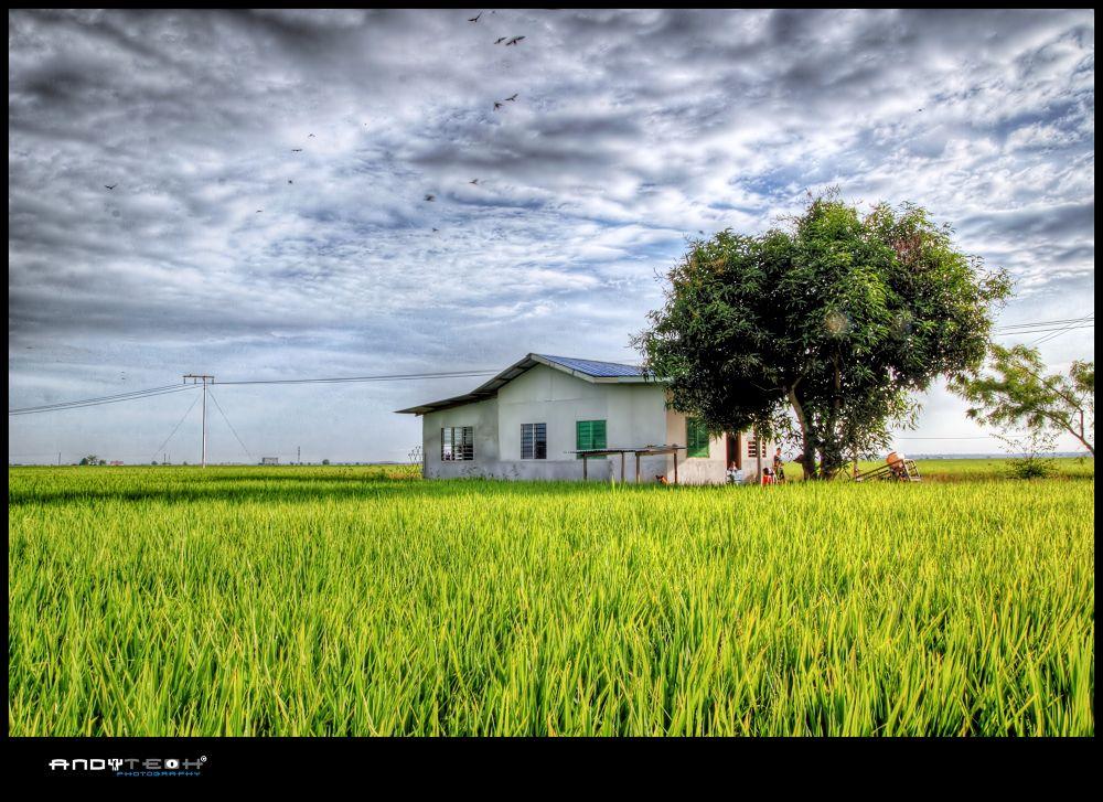 Sekinchan Paddy Field by andyteoh73