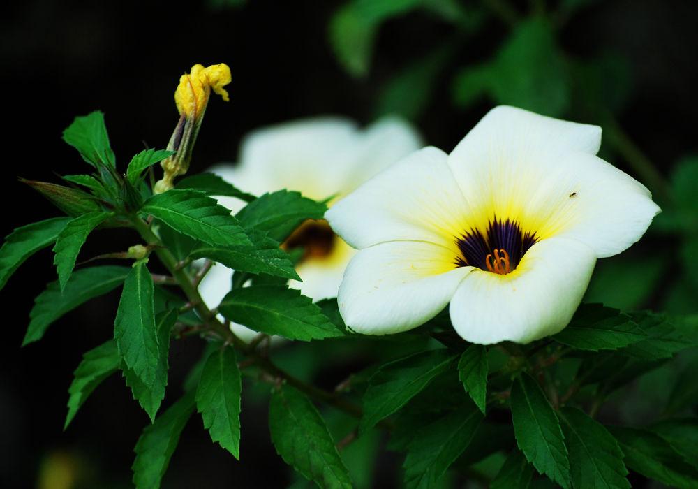 flower_2 by irisjanematabarancanoy