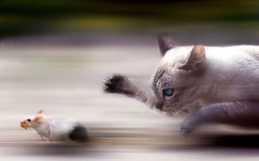 Mouse-vs-Cat by MehdiHerradi