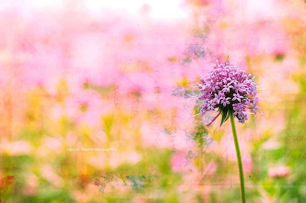 Fleur by Eric Photography