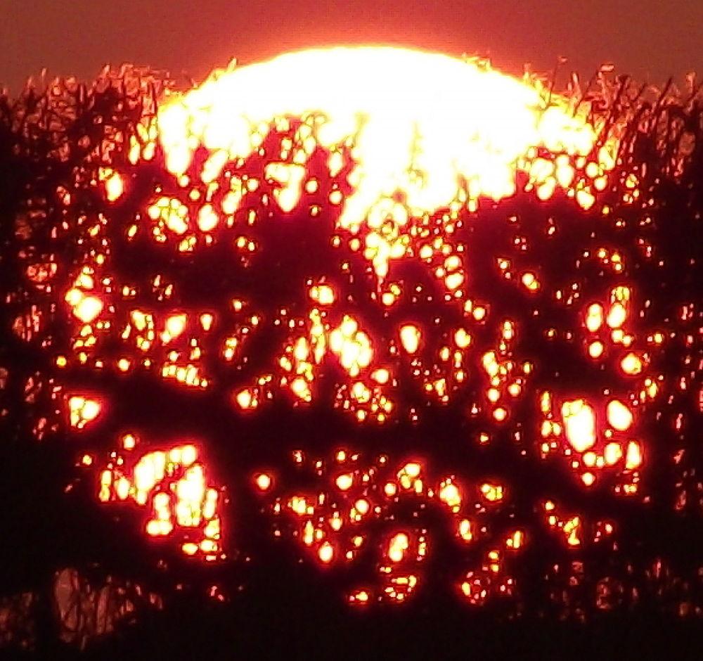 Sun by ianc69