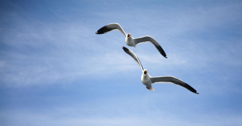 Birds by eidrian