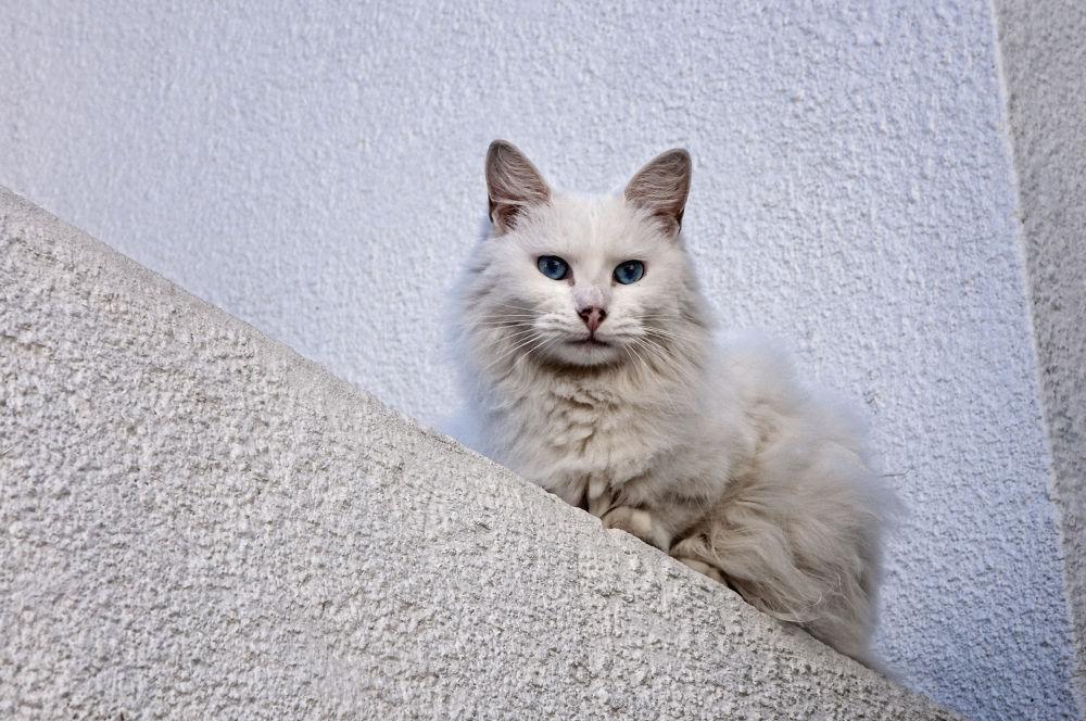 White by eidrian