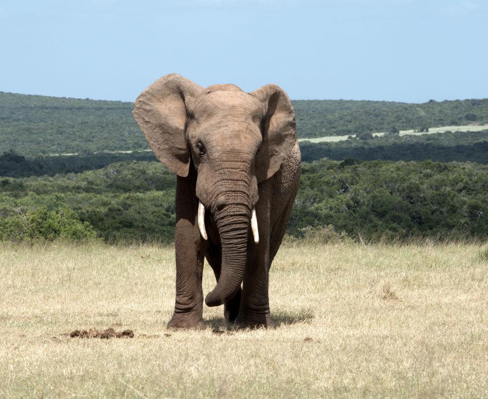 Photo in Animal #wildlife