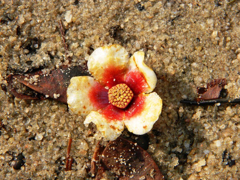 read_n_white_flower by marileiaseixas