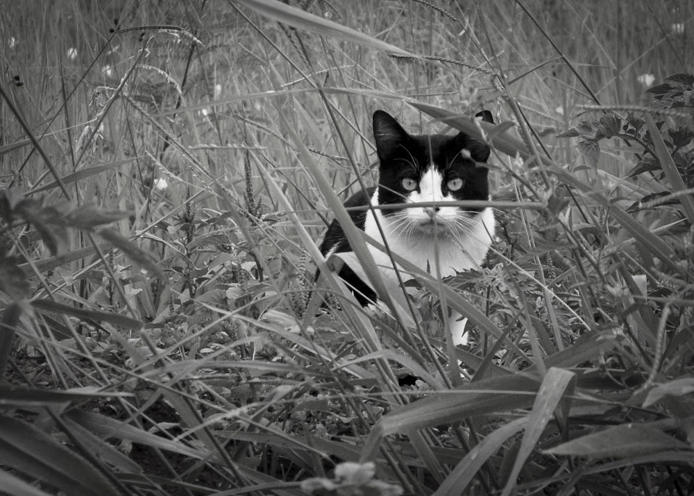 Photo in Black and White #gato #cat #gatuno